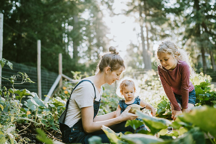 Family Harvesting Vegetables From Garden at Small Home Farm Photograph by RyanJLane