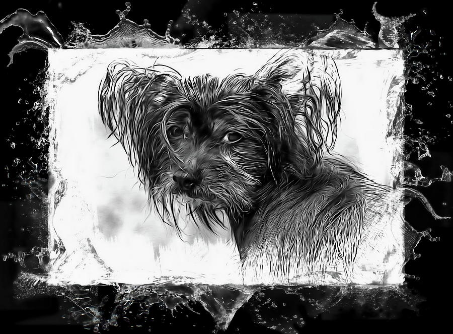 Dog Photograph - Mans Best Friend by Andrea Kollo