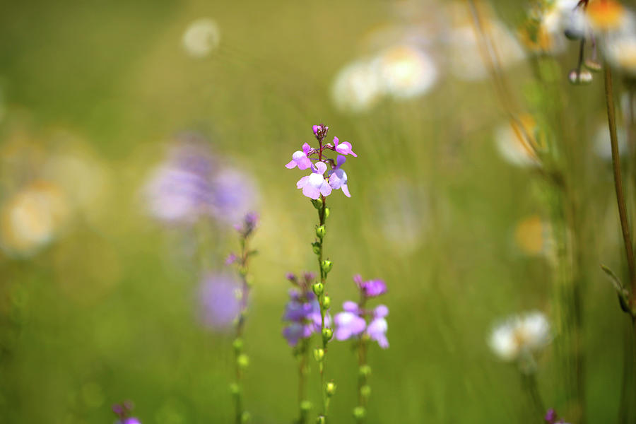 Meadow Photograph