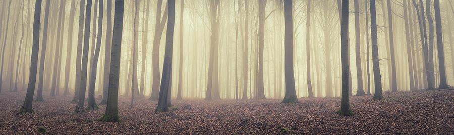 Mystic Woodland Photograph