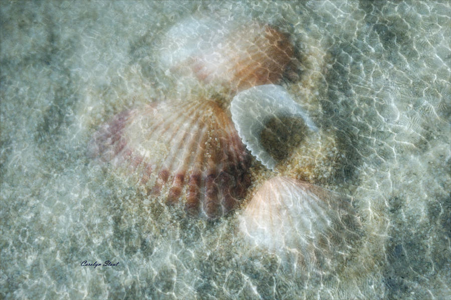 Shells Photograph - Step Lightly by Carolyn Staut