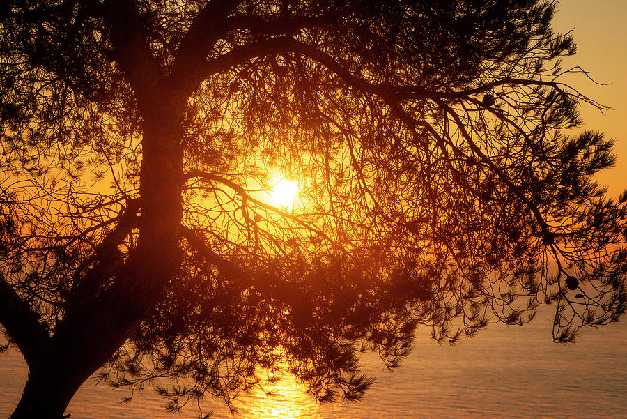 Oropesa Photograph - Silhouette Of A Lonely Tree By The Sea by Vicen Photography