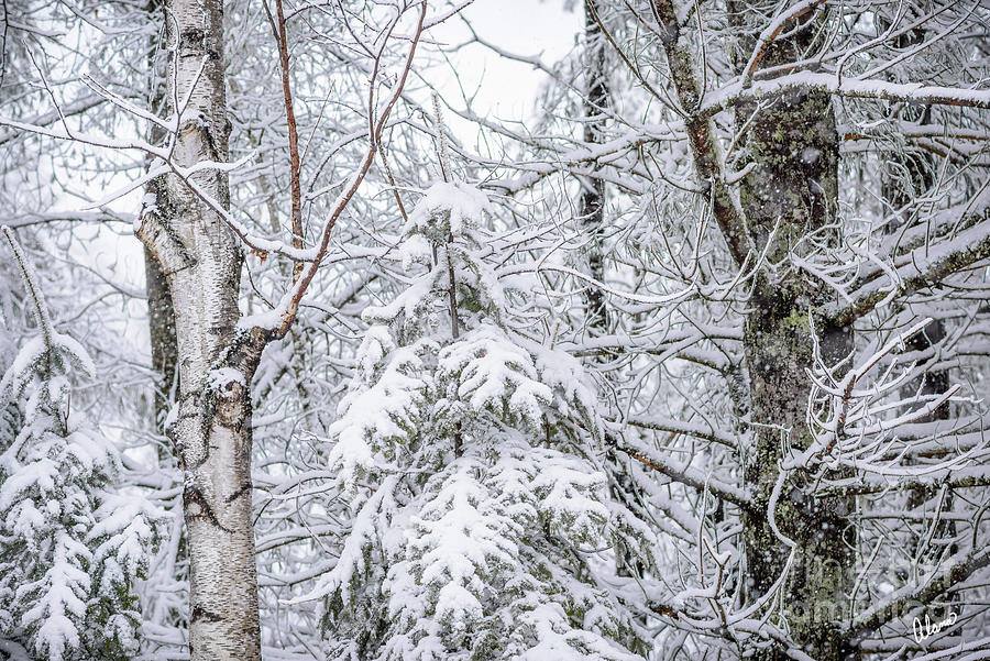 Snow Covered Photograph