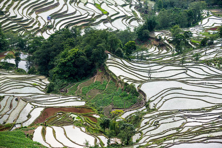 The Terraced Fields At Spring Time Photograph by Zhouyousifang
