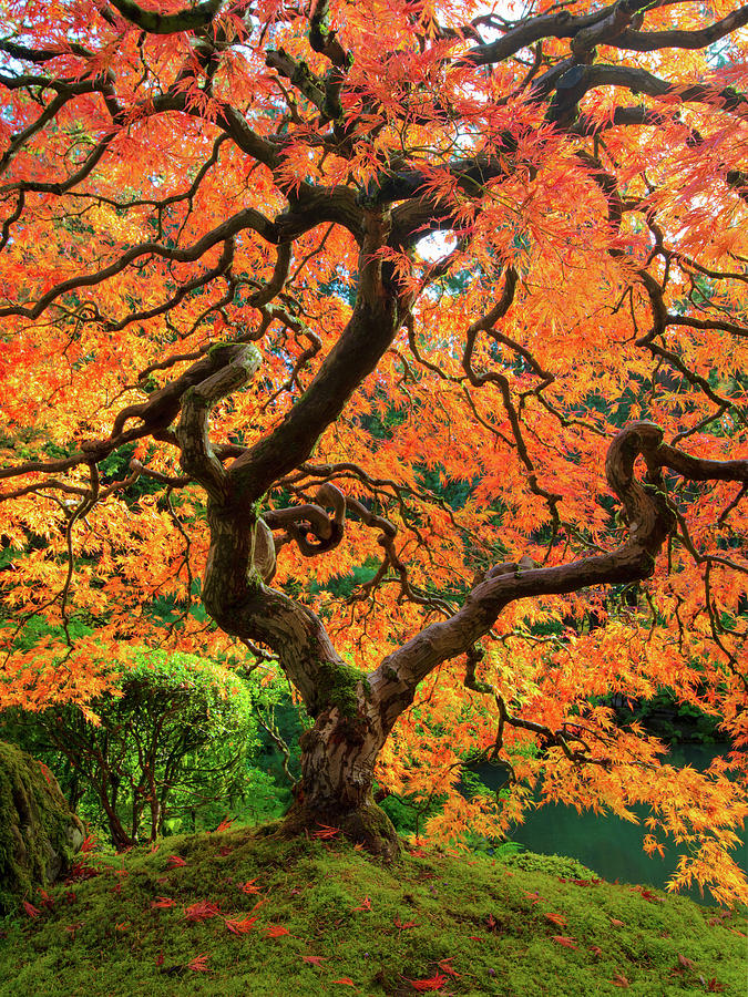The Tree In Fall Photograph