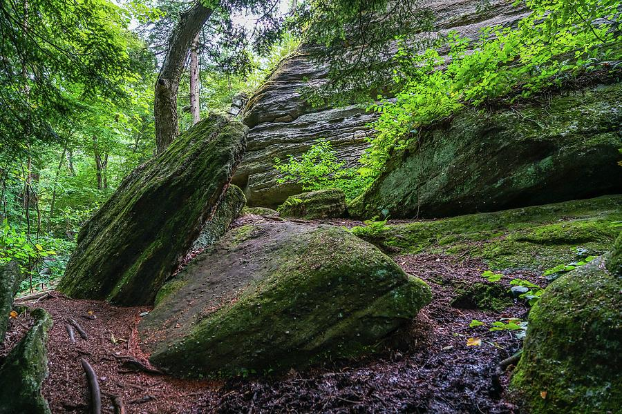 Forest Photograph - Thompson Ledges Park by Ric Schafer