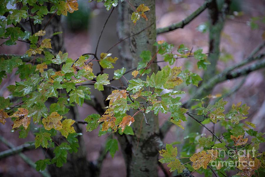 Autumn Transformation Photograph