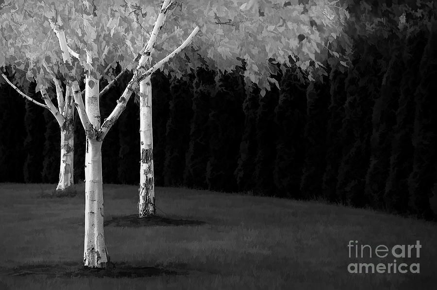 3 Birch Trees Mixed Media