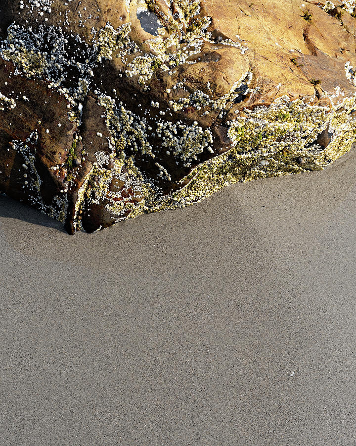 Coastal Patterns And Textures Photograph