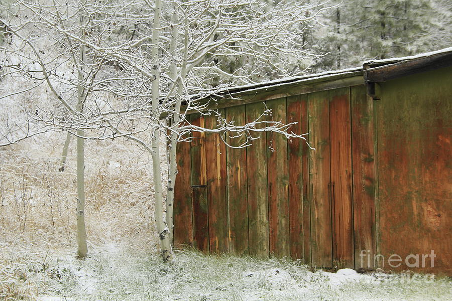 Winter Photograph - Frosty Morning by Roland Stanke