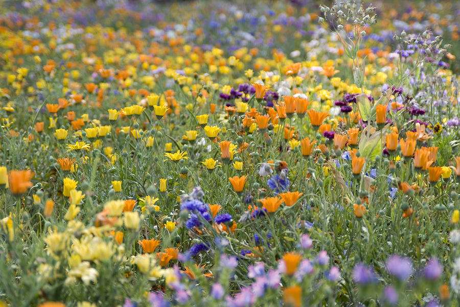 Mixed colourful wildflowers Photograph by Lyn Holly Coorg