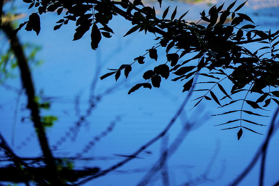 Overhanging Branches And Leaves By The River Bela In Beetham Uk Photograph