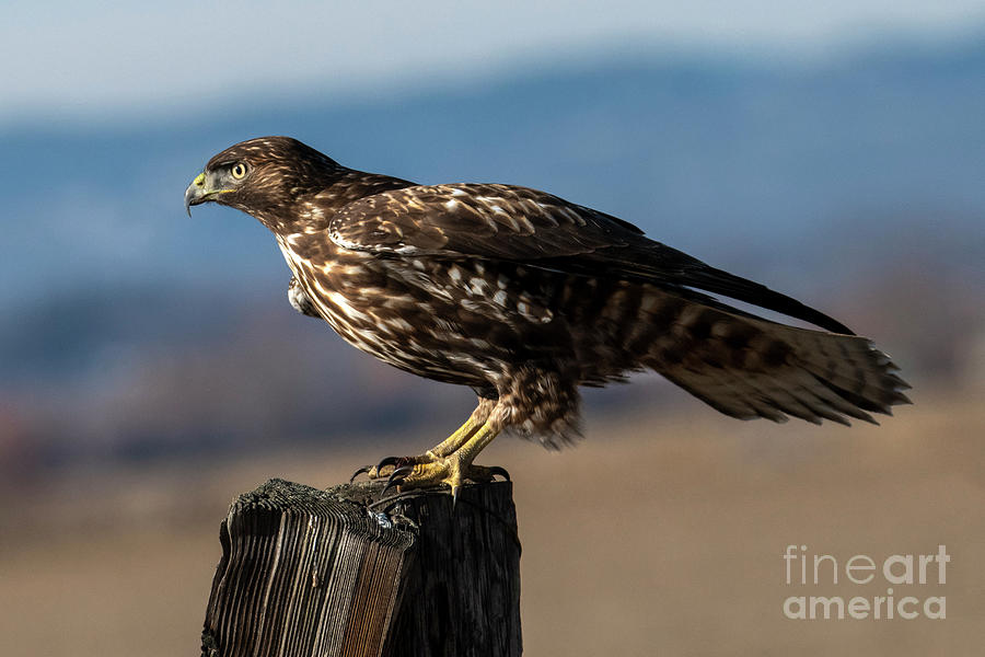 Poised to Fly by Mike Dawson