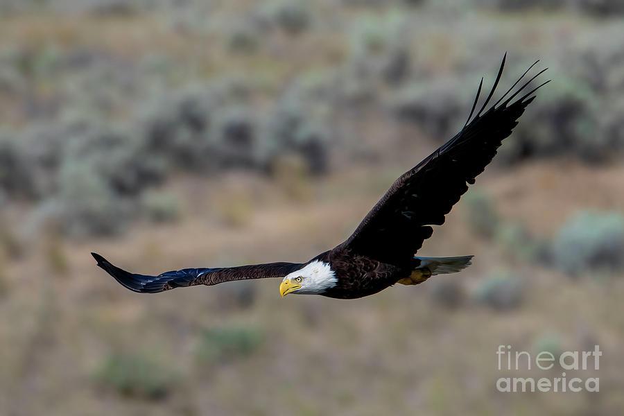 Wingspan Photograph