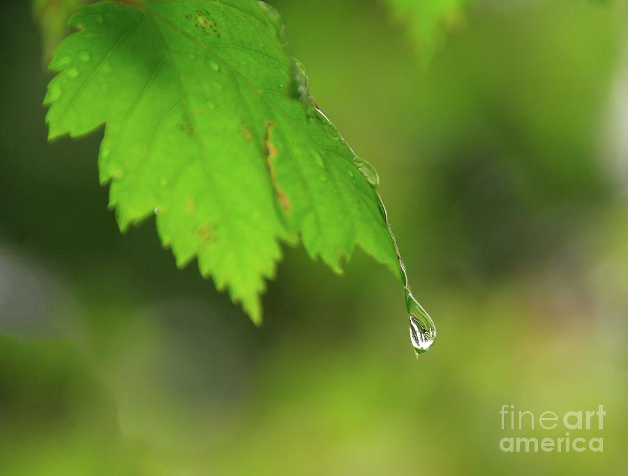 Leaves Photograph - Hanging In There by Roland Stanke