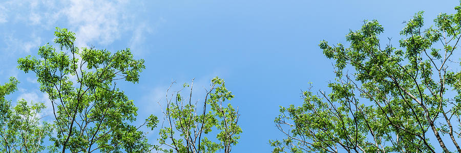 Panorama Of Tops Of Trees In Forest Against Blue Sky With Clouds Background Photograph