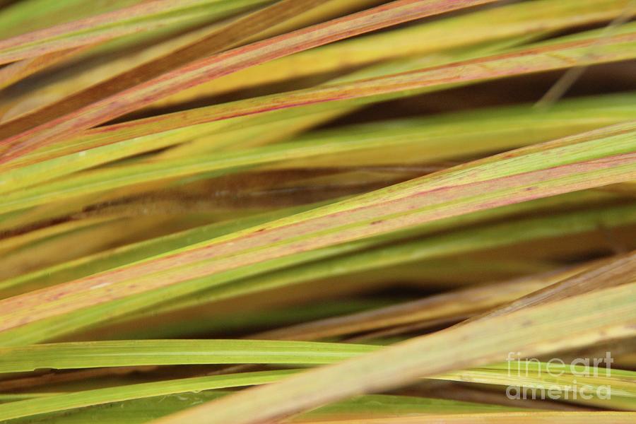 Grasses Photograph