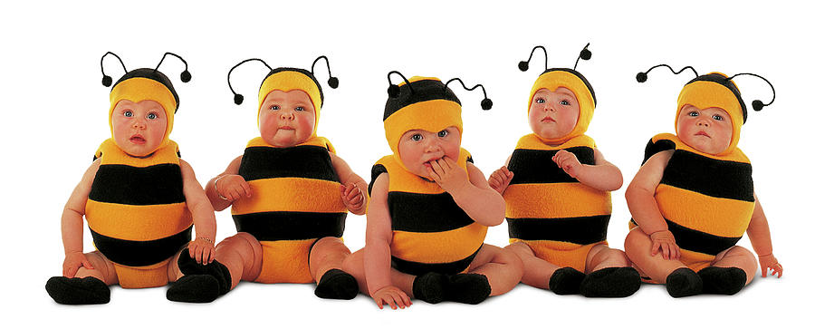 Bee Photograph - 5 Little Bumblebees by Anne Geddes