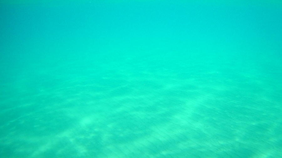 Sea Turtle Caretta - Caretta Zakynthos Island Greece Photograph