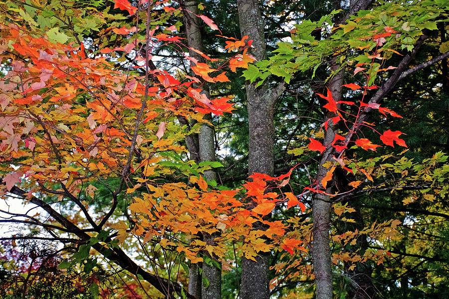 51 Autumn in Thornapple River Area in Grand Rapids, Michigan by Ruth Hager