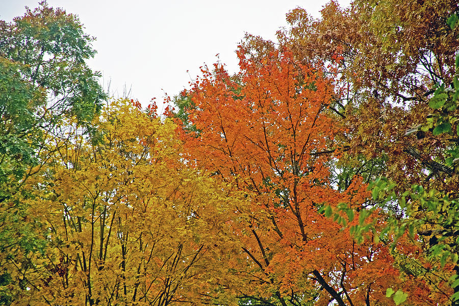 52 Autumn in Thornapple River Area in Grand Rapids, Michigan  by Ruth Hager