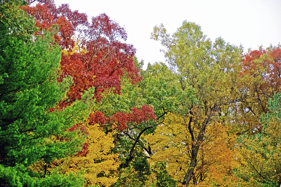 53 Autumn in Thornapple River Area in Grand Rapids, Michigan  by Ruth Hager