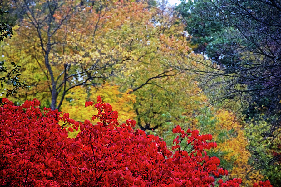 55 Autumn in Thornapple River Area in Grand Rapids, Michigan  by Ruth Hager