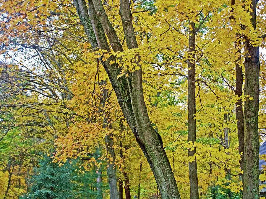 58 Autumn in Thornapple River Area in Grand Rapids, Michigan  by Ruth Hager
