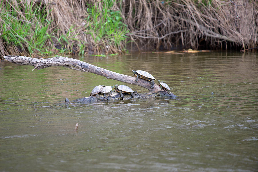 Turtle Party Photograph