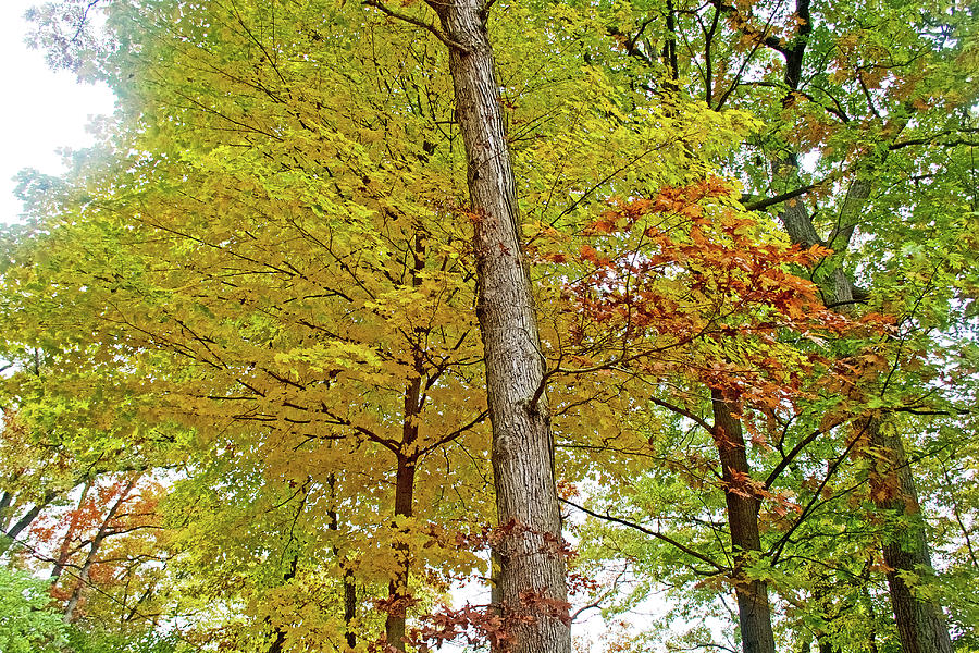 60 Autumn in Thornapple River Area in Grand Rapids, Michigan by Ruth Hager