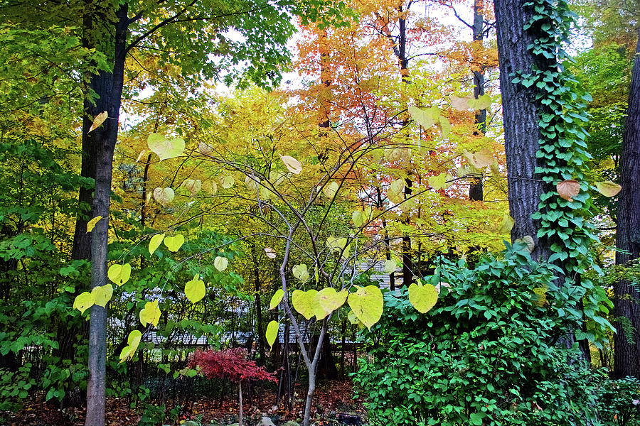 62 Autumn in Thornapple River Area in Grand Rapids, Michigan  by Ruth Hager