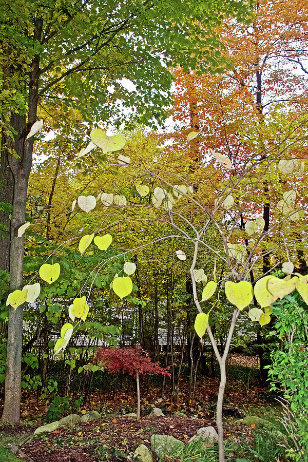 63 Autumn in Thornapple River Area in Grand Rapids, Michigan by Ruth Hager