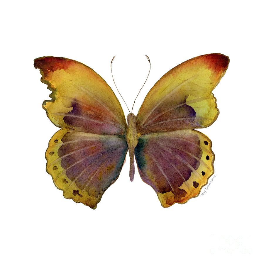 84 Gold-banded Glider Butterfly Painting