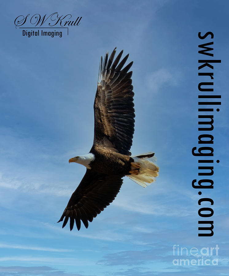 Eagles Photograph - Bald Eagles in Eleven Mile Canyon by Steven Krull