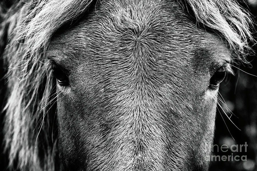 Fine Art Wild Horse In Black And White Photograph