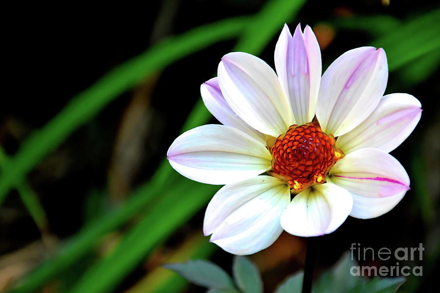 A Bright Face by Diana Mary Sharpton
