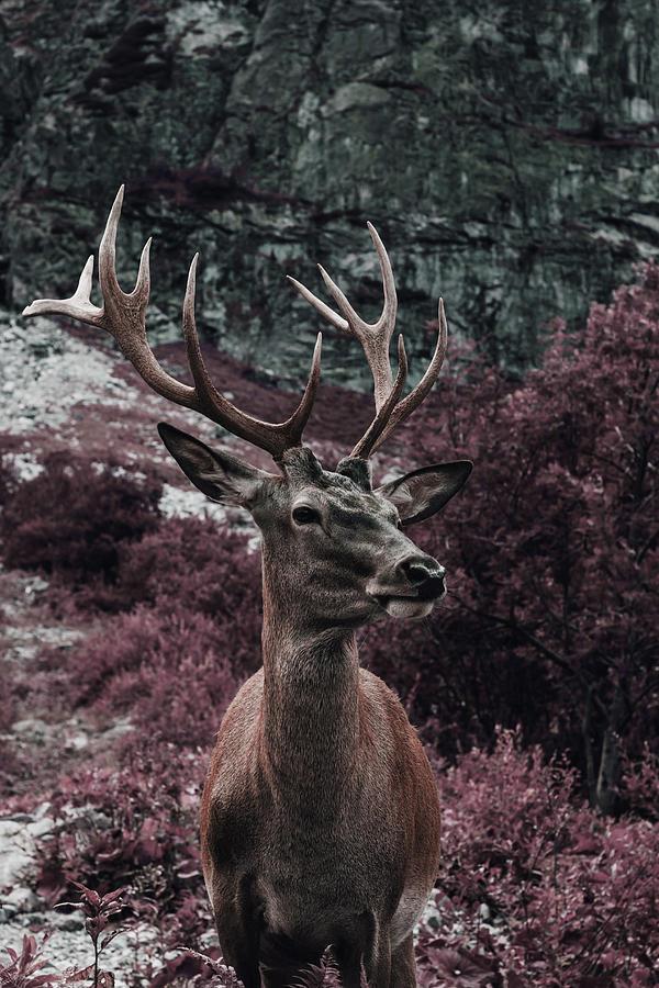A Buck - Surreal Art By Ahmet Asar Digital Art