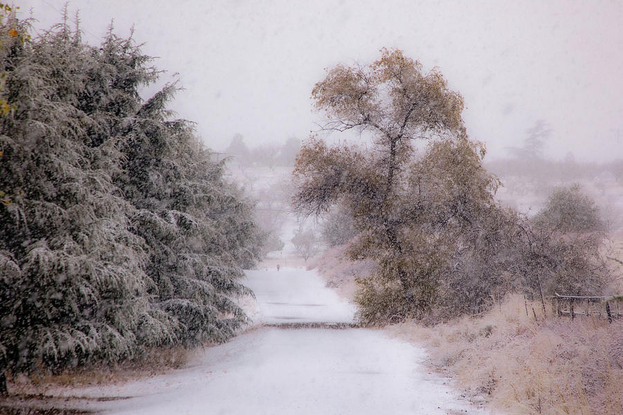 A Country Lane  In Snow Photograph