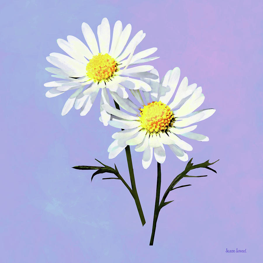 A Couple of Daisies by Susan Savad