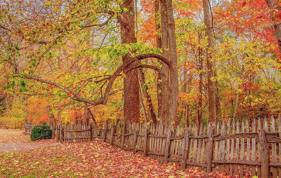 A Crooked Old Fence in the Shadow of Fall by Marcy Wielfaert