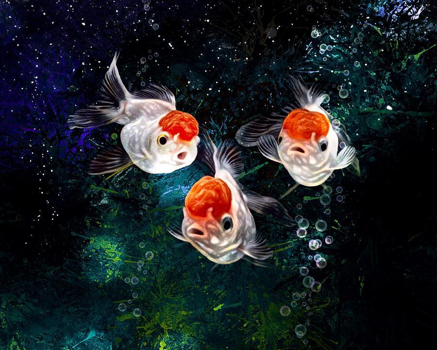 A Curious Group Of Red Cap Oranda Goldfish Digital Art
