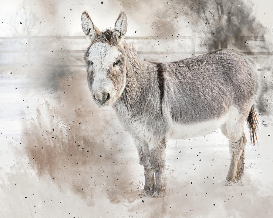 A Donkey's Winter by Jennifer Grossnickle