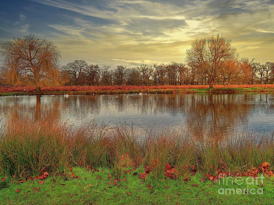 Bushy Park Photograph - A Final Shot Of The Lake by Leigh Kemp