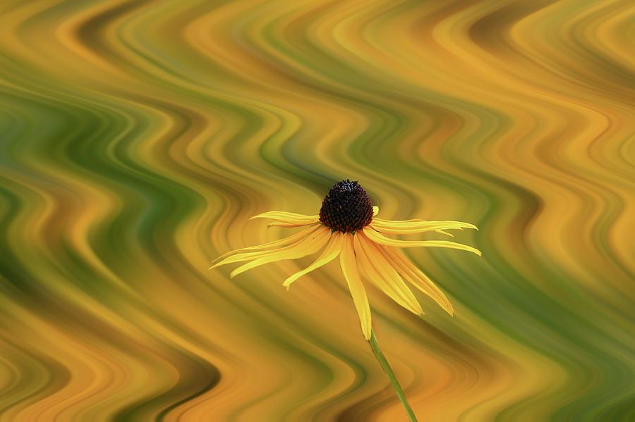 A flower in front of a twirl by Dan Friend