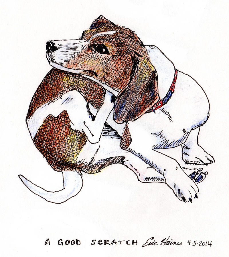 Dachshund Drawing - A Good  Scratch by Eric Haines