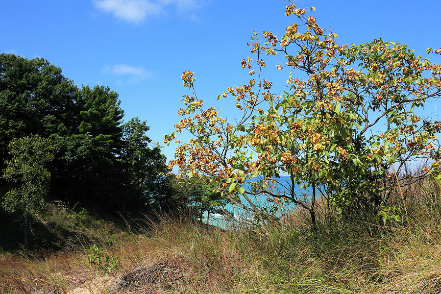 A Hint Of Autumn At The Dunes Photograph