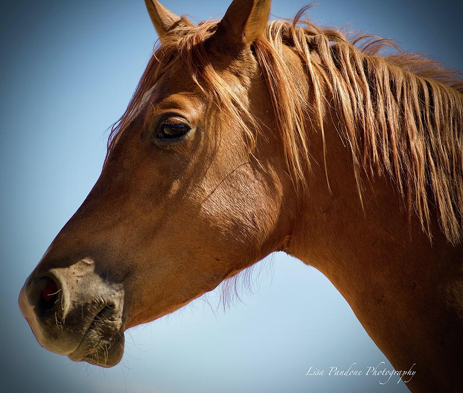 A Horse Look  by Lisa Pandone
