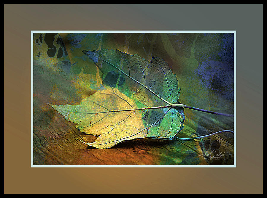 A Leaf Of Many Colors by Rene Crystal