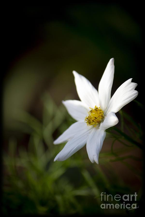 A Little Bit Of White Photograph