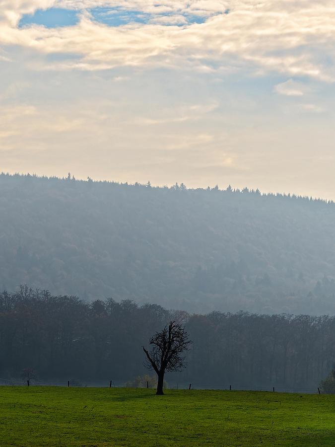 Landscape Photograph - A Lone Tree in the Field by Jussi Laasonen